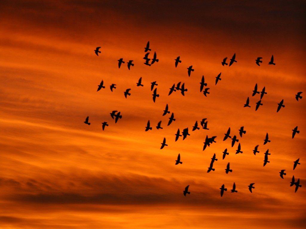 migrazione d'autunno - ottobre 2018