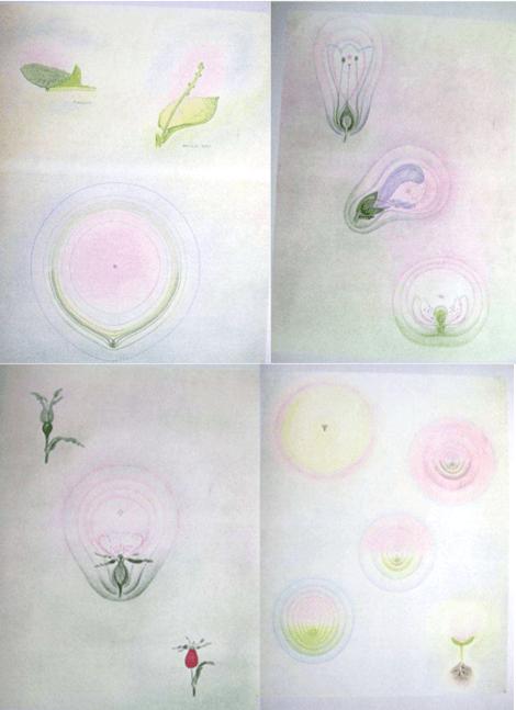 Georg Adam studi sulla pianta tra spazio terrestre e cosmico
